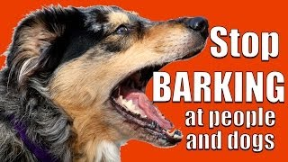 How To TEACH ANY DOG NOT To BARK At Other DOGS And PEOPLE