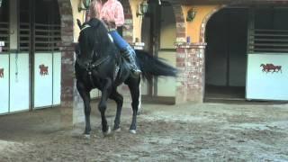 El Moro de Cumpas - Vicente Fernandez - www.DavidySusCaballos.com - El Tyson