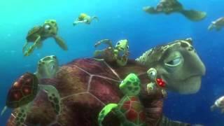 Finding Nemo Turtle Scene