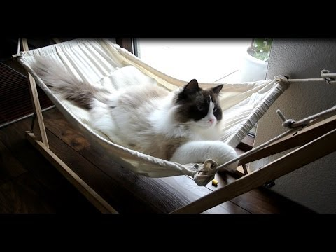 Timo the Cat and his hammock (part 2)