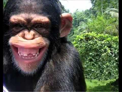 Funny Monkey - Những chú khỉ tinh nghịch