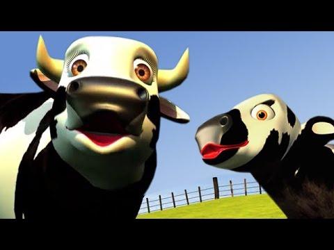 A vaca Maru, Cow
