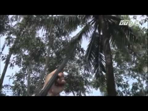 VTC14_Hiểm họa từ súng hơi tự chế tại Cà Mau
