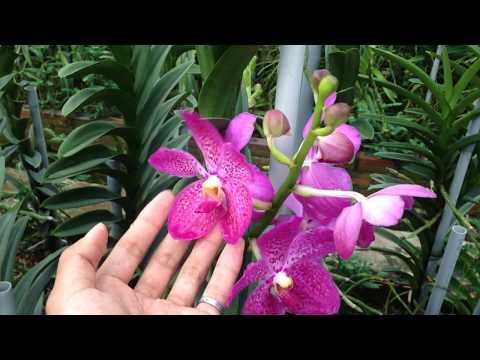 Tham quan vườn lan đẹp tại Long An