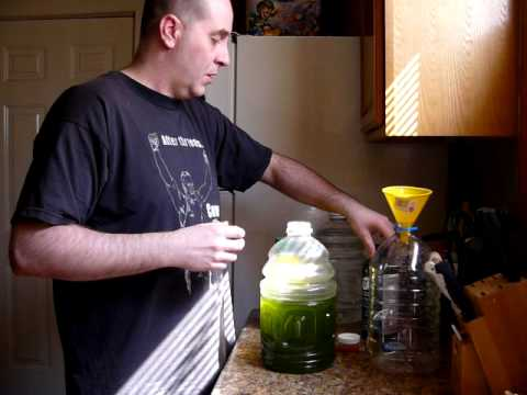 How to grow live marine phytoplankton