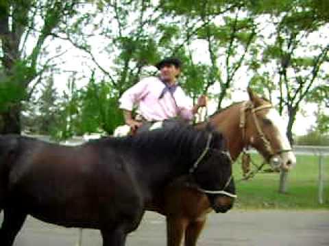 Gauchos General Rodriguez Cordoba tradicion videos fotos caballos videos fotos