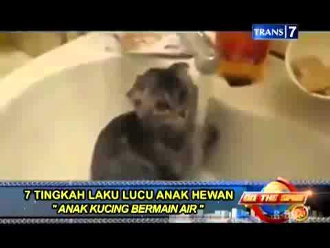 On The Spot   7 Tingkah Laku Lucu Anak Hewan Yang Masih Kecil Anak Kucing Bermain Air