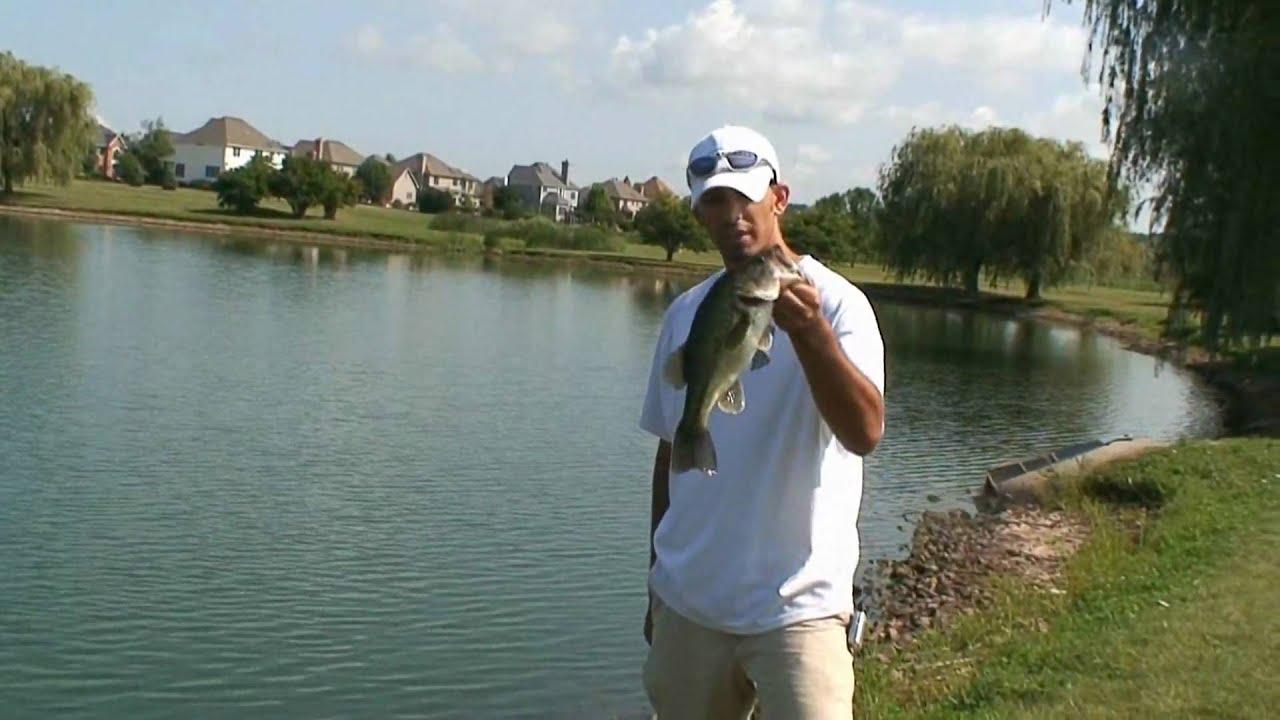 Bass fishing in ponds using creek chubs as bait youtube for Bass fishing youtube