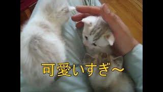 子猫たちを抱きしめる