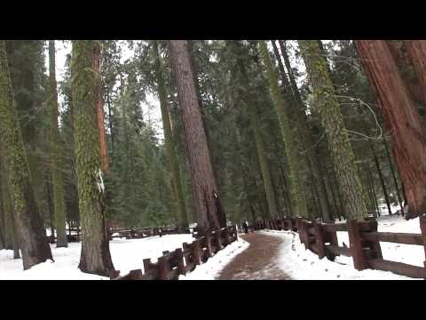 The General Sherman Tree (Sequoia National Park) 2014