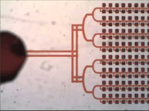Digital PCR on an integrated self-priming compartmentalization chip