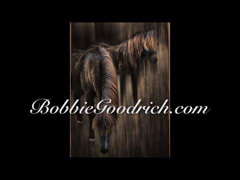 Bobbie Goodrich - Wildlife Photographer