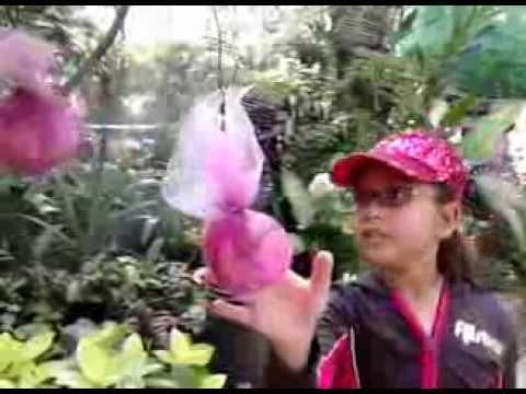 World Wildlife Day in the Butterfly Garden
