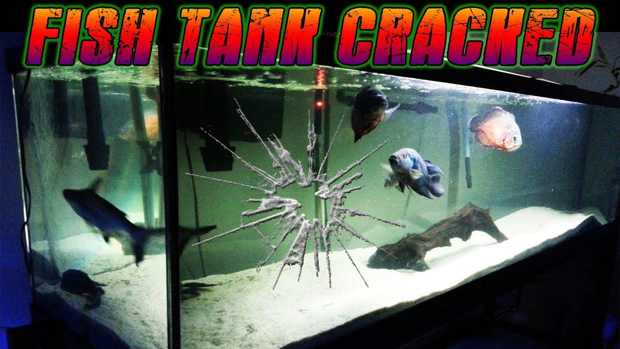 135 gallon fish tank cracked youtube for 150 gallon fish tank dimensions