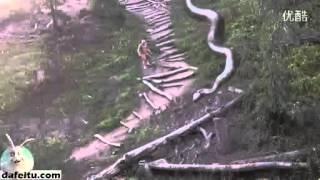 Una De Las Serpientes Más Grandes Del Mundo, La Altura
