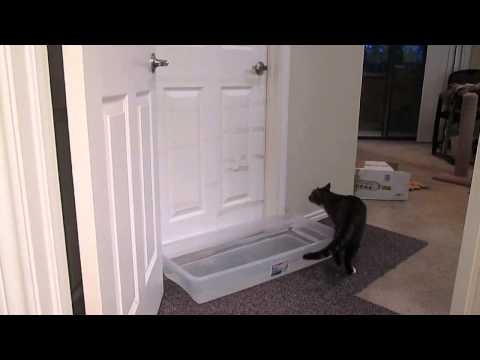 Cat opening doors, Mulder the cat not being discouraged by closed doors.