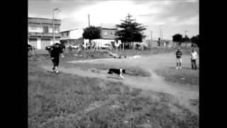 Extreme Pitbull Champion Long Jump! Best Pit Bull Dog Line