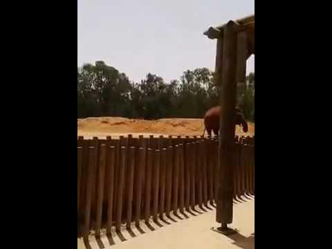 فيل يقتل طفلة بحديقة الحيوانات