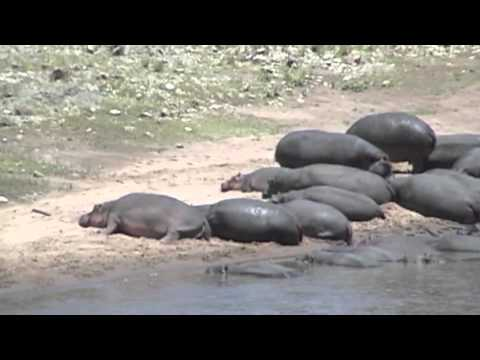 Rhino Dump/ Best of Kenya