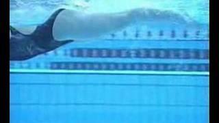 Técnica del estilo crol de  natación