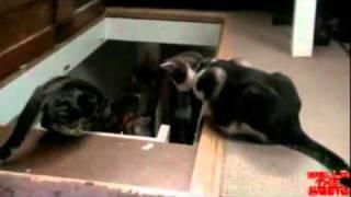 Gato empurra o outro da escada
