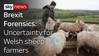 Brexit Forensics: Impact on Welsh lamb exports