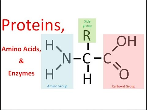 Proteins & Enzymes (regular biology) updated