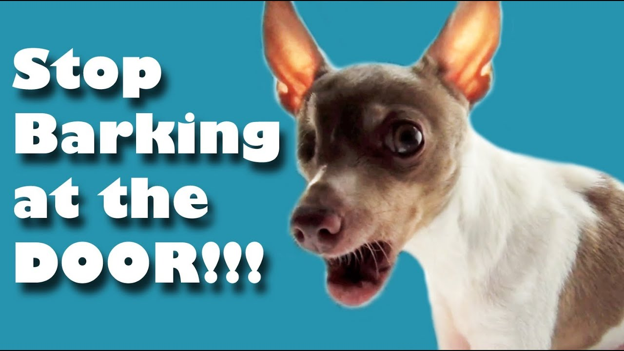 How To Stop Dogs From Barking When The Doorbell Rings