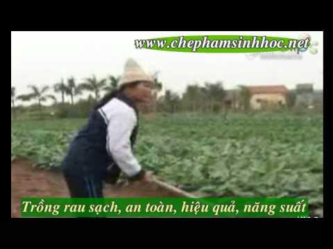 Trồng rau siêu tốc cho thu hoạch chỉ sau 1 ngày tại Hà Nội ???
