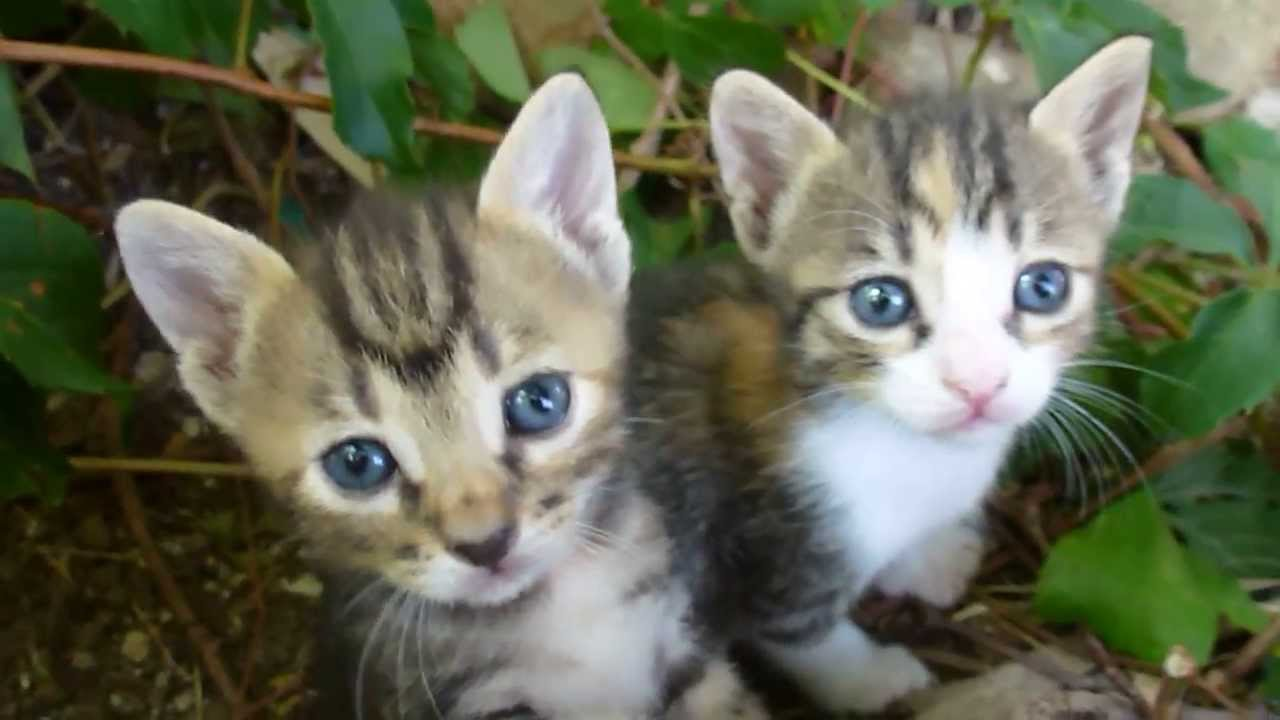 So Cute These Little Kittens Hd Video Zo Lief Deze