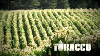 picture of Tobacco Farmer