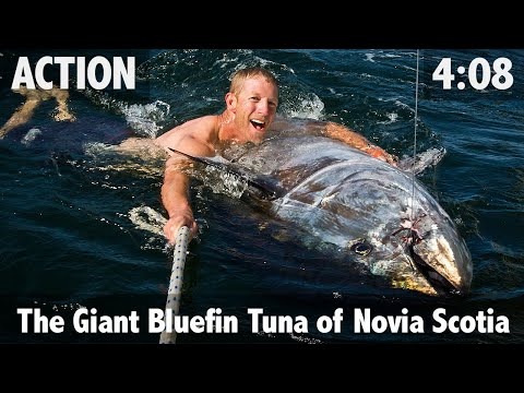 The Giant Bluefin Tuna of Nova Scotia