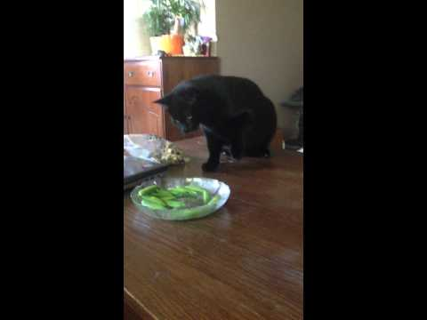 Cat Investigates Musical Peas