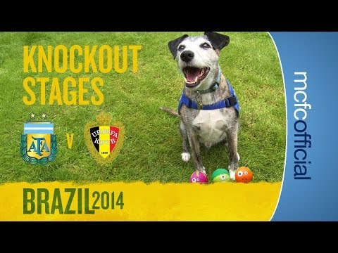 DOUGIE THE DOG PREDICTS | Argentina v Belgium Quarter Finals | World Cup Predictions