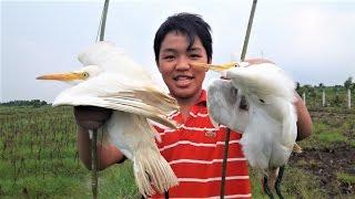 Cách Bẫy Cò Bằng Bẫy Đạp Rất Hiệu Quả | Bird Trap In Vietnam
