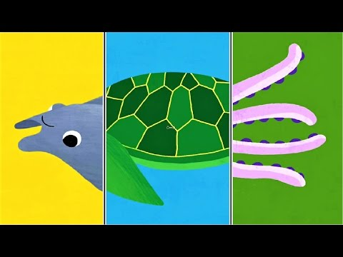 """Play """"Animal Match Up"""" ! Baby Learn About Sea Animals Combined Real Animals 