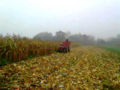 Picking corn IMT 539 + Majevica