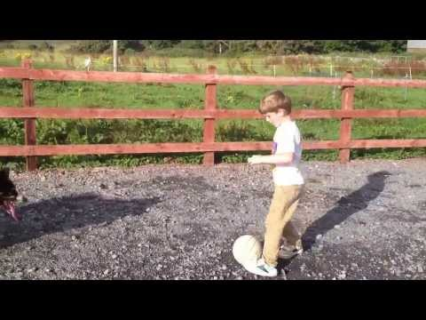 0 Dog playing football, dog lovers will love this