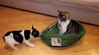 Perro y gato pelean por la cama