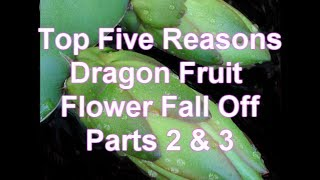Parts 2 & 3 Top Five Reasons Dragon Fruit Flowers Fall Off