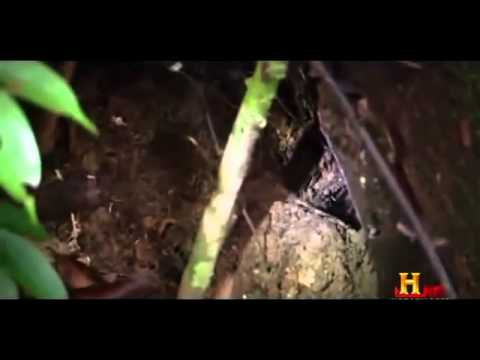 Camel Spiders & other Huge Arachnids  british Documentary Part 2