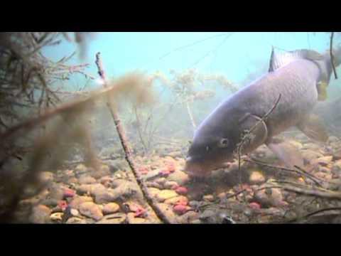 Kapre pod vodou