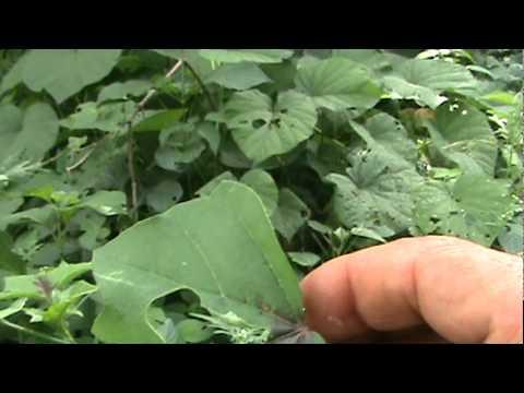 Supervivencia con Plantas Comestibles