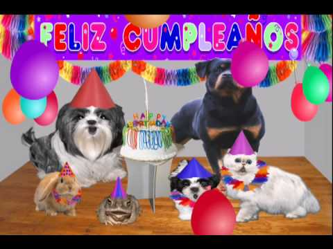 Dedicatoria de cumpleaños, Video chistoso, video gracioso