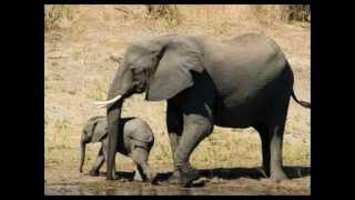 AFRICA SELVAGEM FAUNA E FLORA ANIMAIS