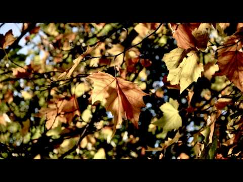 Tomaso Albinoni- Adagio in G Minor by Giazotto (BEST QUALITY) (HD 1080p)