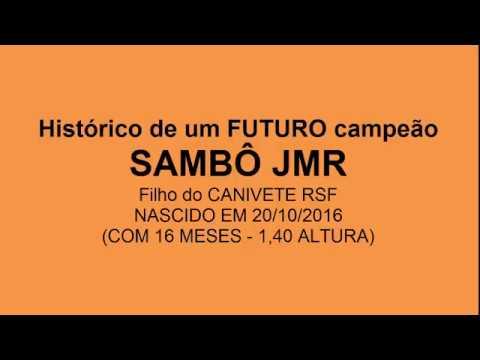 SAMBÔ JMR - FUTURO REPRODUTOR DIFERENCIADO