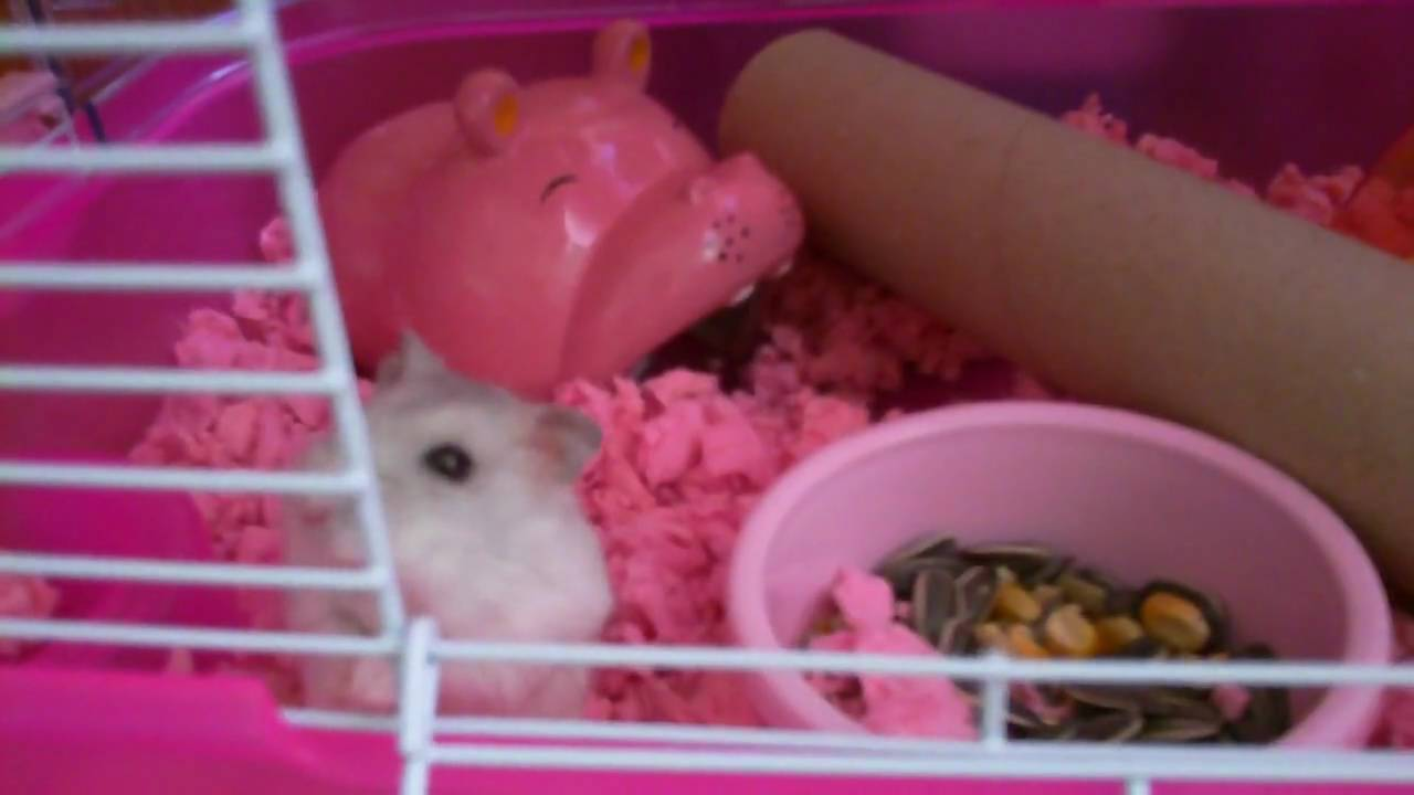 Hamster Breeds Questions  Answerscom
