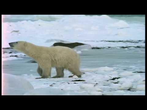 Polar Bear: Feeling the Heat with Jeff Corwin