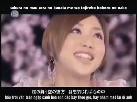 Nhạc Nhật Bản  Sakura 桜 Bài hát tiếng nhật cảm động